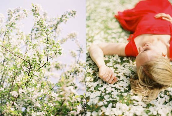cerisier sakura esthetique